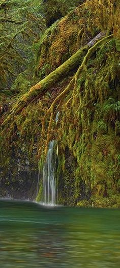 Hanging garden in the Columbia River Gorge National Scenic Area east of Portland, Oregon •