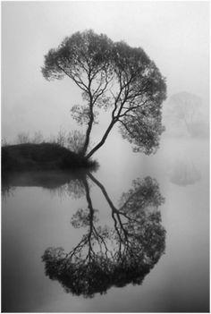 B/W nature reflection