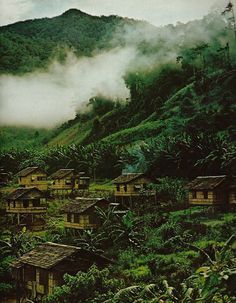 Neatly spaced huts of a Mansaka barrio in the Philippines National Geographic   August 1971