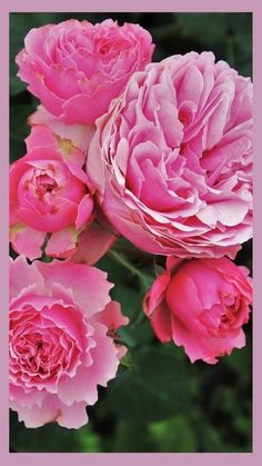 Rose Wallpaper, Iphone Wallpaper, Meaningful Quotes, Inspirational Quotes, Funny Quotes, Life Quotes, Pretty Roses, Romantic Roses, What Makes You Happy
