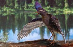 Image: Archaeornithura meemannae