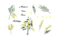 Mimosa flores imágenes prediseñadas acuarela dibujadas a   Etsy Mimosas, Wedding Stationery Sets, Wedding Invitations, Clipart, Yellow Wedding Flowers, Life Cycles, Watercolor Flowers, How To Draw Hands, Blog
