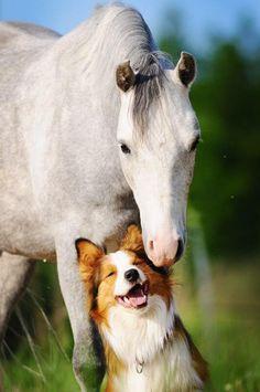 As long as they can share 'em feelingzzz... www.barkingtails.com