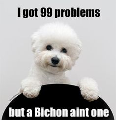 This is.....AWESOME! Got 99 problems but a #bichon aint one!