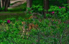 Bambi and Mama Bambi, My Animal, Animal Photography, Worlds Largest, Deviantart, Outdoor Decor, Artist, Plants, Animals