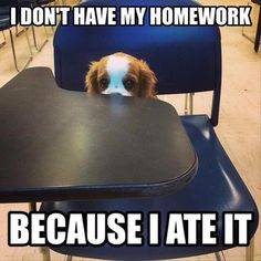 Funny Animal Pictures Of The Day – 20 Pics - Daily Lol Pics