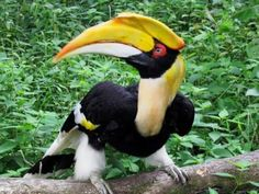 Bondla Wildlife Sanctuary - in Goa,India