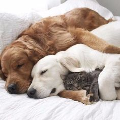 Cute dogs and cats, adorable dogs, i love dogs, cute puppies, dogs Animals And Pets, Baby Animals, Funny Animals, Cute Animals, Funny Dogs, Wild Animals, Cute Puppies, Dogs And Puppies, Doggies