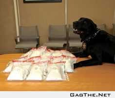 Jack is proud of his meth bust today.