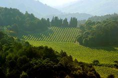 Limoux 11 300 Languedoc Sud France