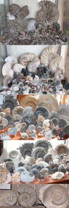 jsdammonites