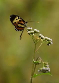 everyday a different color, beautiful gifs, soft goth, nature. Calming Pictures, Relaxing Images, Cool Pictures, Beautiful Flowers Wallpapers, Beautiful Butterflies, Butterfly Gif, Orange Butterfly, Animal Movement, Garden Angels