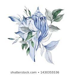 Ilustrações stock, imagens e vetores de Sea Shell | Shutterstock Rooster, How To Draw Hands, Shells, Watercolor, Illustration, Pretty, Vectors, Tatoo, Tattoo Art