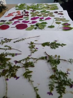 Picture of Drying Flowers