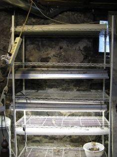 Vegetable gardening indoors on pinterest indoor for Fish emulsion home depot