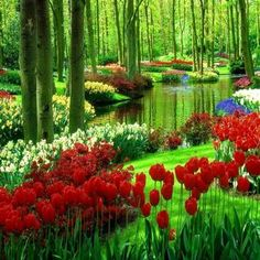 RT Just 100%Glambert №① Keukenhof The Netherlands  - Find more tulips on Twitter https://twitter.com/tulips_holland?utm_content=bufferf99db&utm_medium=social&utm_source=pinterest.com&utm_campaign=buffer or https://twitter.com/tulip_festival?utm_content=bufferd555d&utm_medium=social&utm_source=pinterest.com&utm_campaign=buffer