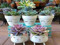 Pin on Plantas Succulent Gardening, Cacti And Succulents, Planting Succulents, Planting Flowers, Flower Pot Crafts, Clay Pot Crafts, Painted Flower Pots, Painted Pots, Pot Plante