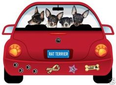 Rat Terrier Road Trip