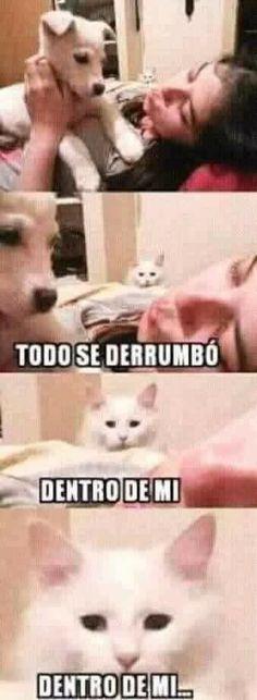 #chiste #toquedehumor