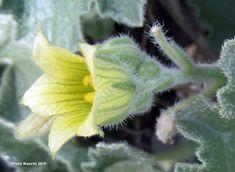 Herbalism, Herbs, Plants, Blog, Drinks, Decor, Healthy Herbs, Health, Herbal Medicine