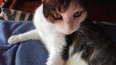 Ricomincio da Me My Secret Garden.: Eccomi, dice il gatto, amami come sono oppure non ...