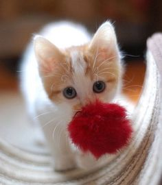 Awwww, you brought me a present !