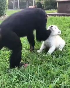 They may be different, but they're still friends - cut , funny dogs and cats - Nice cat Cute Funny Animals, Cute Baby Animals, Funny Dogs, Cute Dogs, Funny Humor, Nature Animals, Animals And Pets, Photo Animaliere, Cute Animal Videos