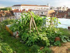 gorgeous rooftop garden