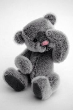 Pink and Gray ~ Peek-a-Boo Teddy Bear Tatty Teddy, Grey Teddy Bear, Cute Teddy Bears, Love Bear, Pink Grey, Pale Pink, Color Splash, Cuddling, Cute Animals
