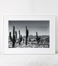 Cacti Landscape / Large by Pampa available at Indie Home Collective