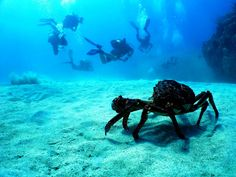 underwater diver photos | Scuba Diving in Florida Gives So Many Challenges To You: Scuba Diving ...