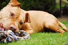 3 dog games to play with your dog