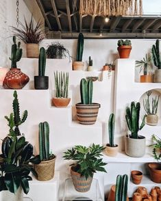 33 Awesome Indoor Garden For Apartment Design Ideas - Backyard Decoration Cacti And Succulents, Cactus Plants, Plant Design, Garden Design, Cactus E Suculentas, Decoration Plante, Plants Are Friends, Cactus Flower, Flower Bookey