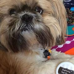 This face makes me melt! We love featuring our customers photos @rascandmiss  By the way, TGIF! Who has big plans with their best furry friends this weekend?