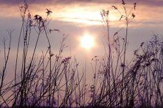 #westeastmagazine #BacktoEden #PauldeLuna #nature #field #sun