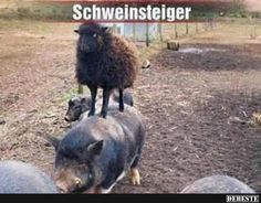 Schweinsteiger.. | Lustige Bilder, Sprüche, Witze, echt lustig Funny Animal Pictures, Cute Funny Animals, Funny Cute, Funny Lyrics, Dont Forget To Smile, Funny Gags, Tier Fotos, Good Jokes, Workout Humor