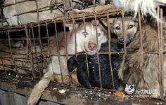 French blog about animal injustice in China...    -- http://urgence-animaux-de-chine.over-blog.com/