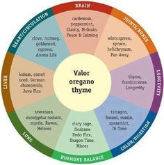 An excellent illustration highlighting what oils are useful for the different areas of the body.  This chart is actually an alternative to the traditional raindrop treatment, depending of the emphasis you want. All start out with Valor, Oregano and Thyme, just like the original raindrop, but it can be modified for different results.  https://www.facebook.com/EssentialOilsForFamilyandFarm