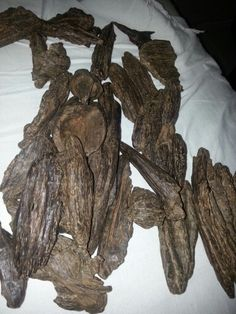Agarwood king