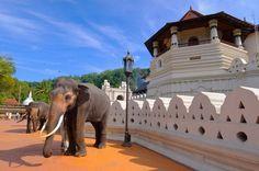 """Képtalálat a következőre: """"sri lanka temple"""""""