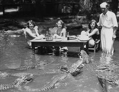 35 Rare Historical Photos - Three women dining with alligators at The California Alligator Farm in Los Angeles. Bizarre Photos, Rare Photos, Old Photos, Vintage Photos, 1920s Photos, Victorian Photos, Antique Photos, History Page, History Class