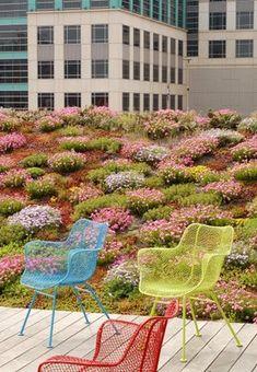 ASLA heaquarters D.C. green roof.  via Landscape+Urbanism