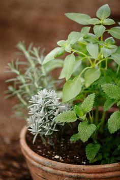 http://www.vegetable-garden-guide.com/container-vegetable-gardening.html
