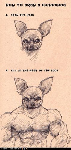 how to draw a chihuahua ;-) this is so how chihuahuas see themselves.