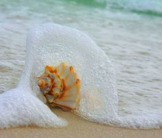 #seashell #beach