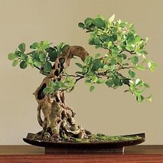 ~ Faux Boxwood Bonsai ~