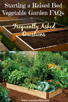 Starting a raised bed vegetable garden takes a little bit of effort to set up, but the benefits are enormous. Here are some frequently asked questions about starting a raised bed. Home Vegetable Garden, Tomato Garden, Herb Garden, Tomato Plants, Growing Tomatoes In Containers, Growing Vegetables, Grow Tomatoes, Gardening Vegetables, Cherry Tomatoes