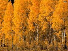 осиновый лес - Поиск в Google