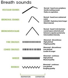 Breath sounds #nursing