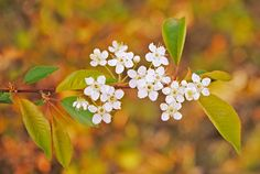 spring bloom by LucieG-Stock